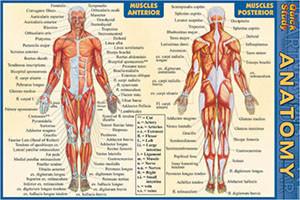 Anatomy Pocket Guide